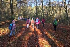 Wandern im Herbstwald